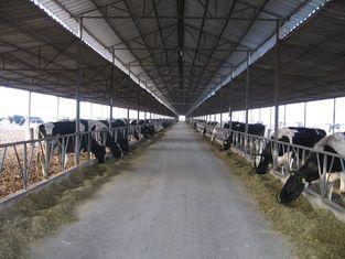 Chine systèmes de vue en acier Pré-machinés multipliant la vache/cheval avec des panneaux de toit fournisseur